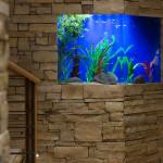 In-wall fish tank